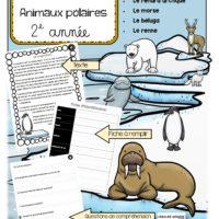 compréhension-de-textes-informatifs-animaux-polaires-images-page-1